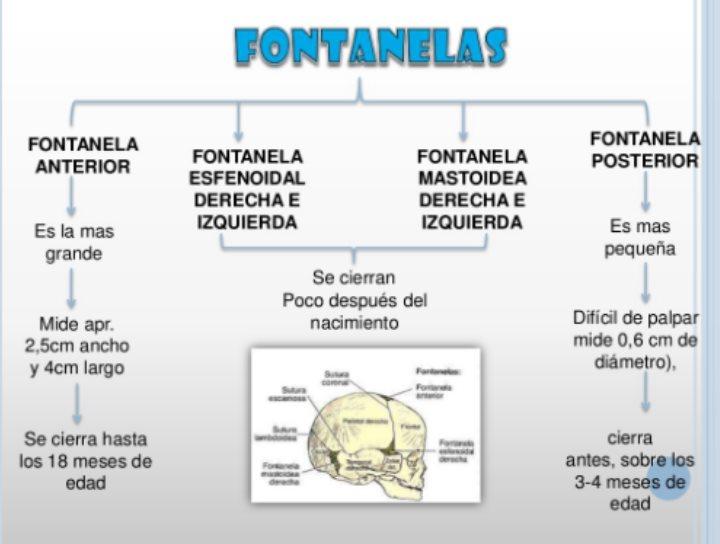 Bonito Fontanelas Inspiración - Anatomía de Las Imágenesdel Cuerpo ...