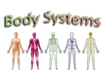 body systems copy1 on emaze, Cephalic Vein