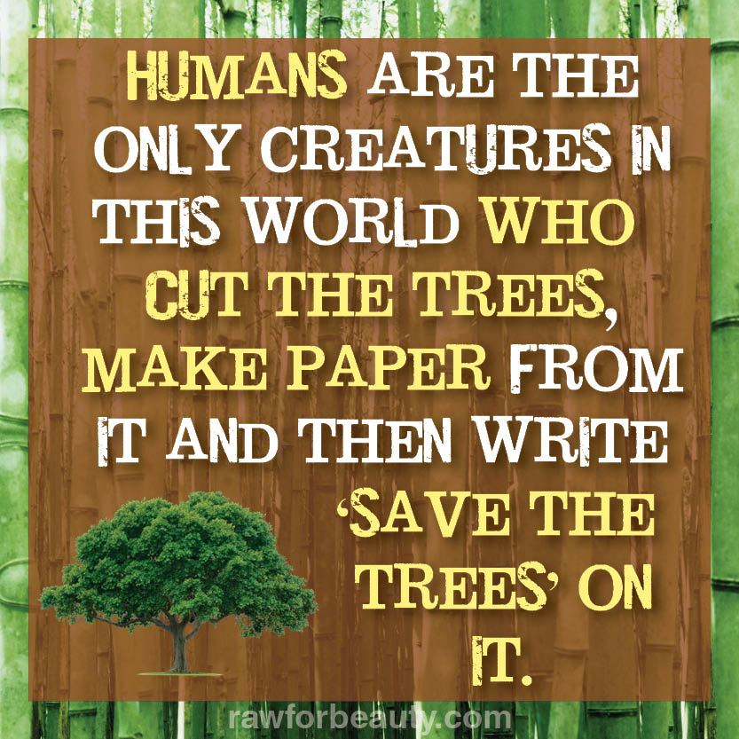 How many trees are saved by recycling paper?