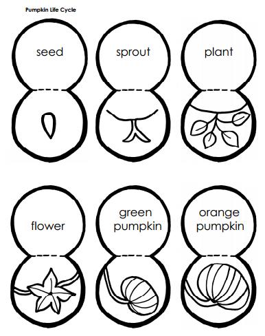 Pumpkins Pbl
