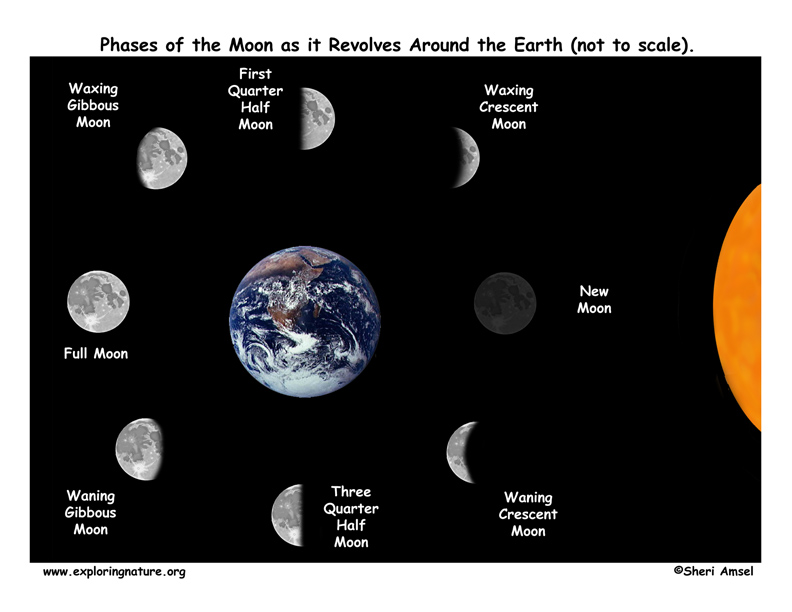 8 phases of the moon