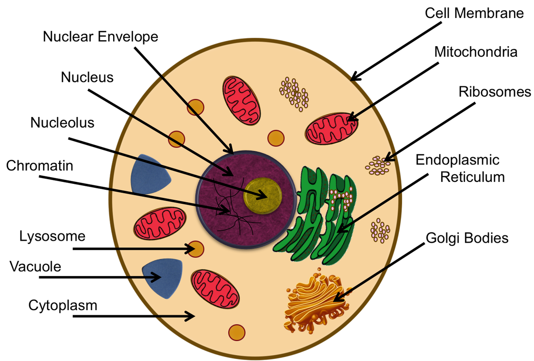 Cell analogy 1