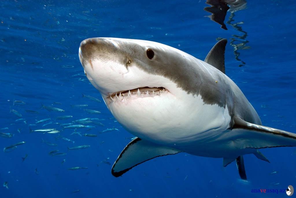 Balina dişləri ile ilgili görsel sonucu