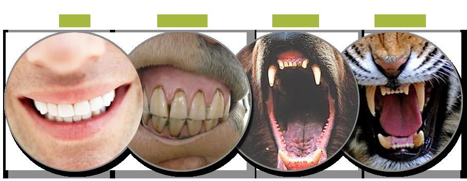 сопоставление зубов и родственников все основные функции