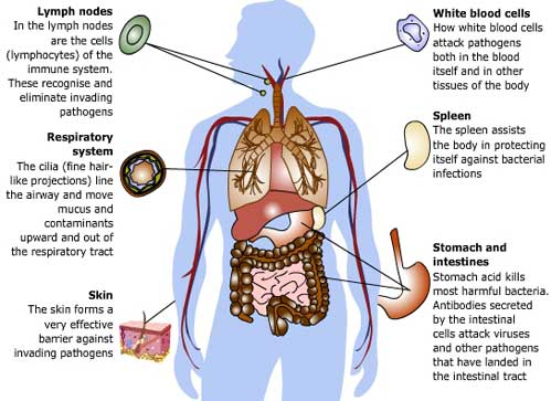 Organ System Connections on emaze