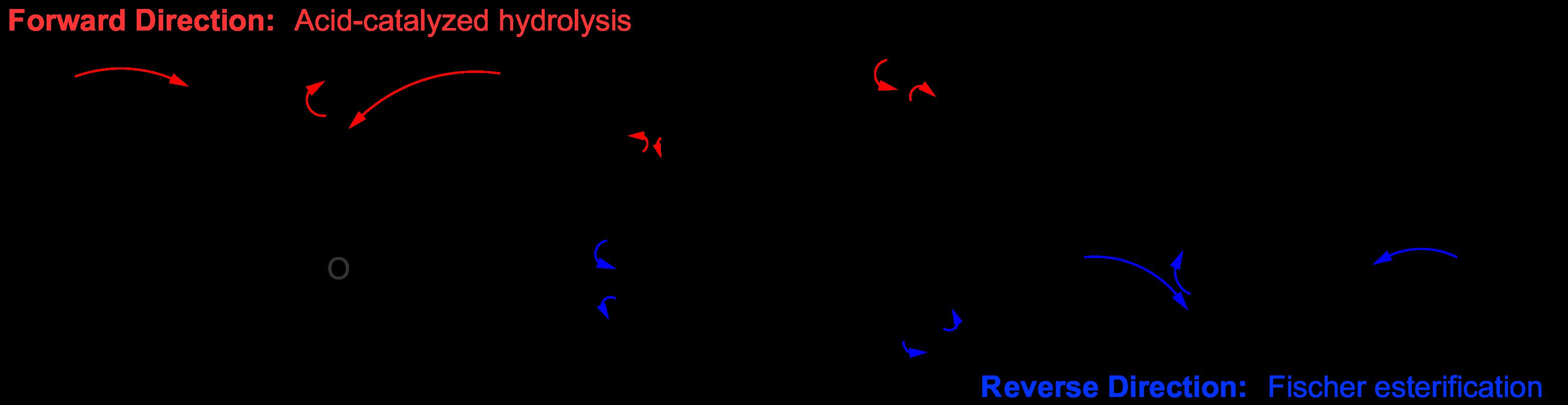ester hydrolysis