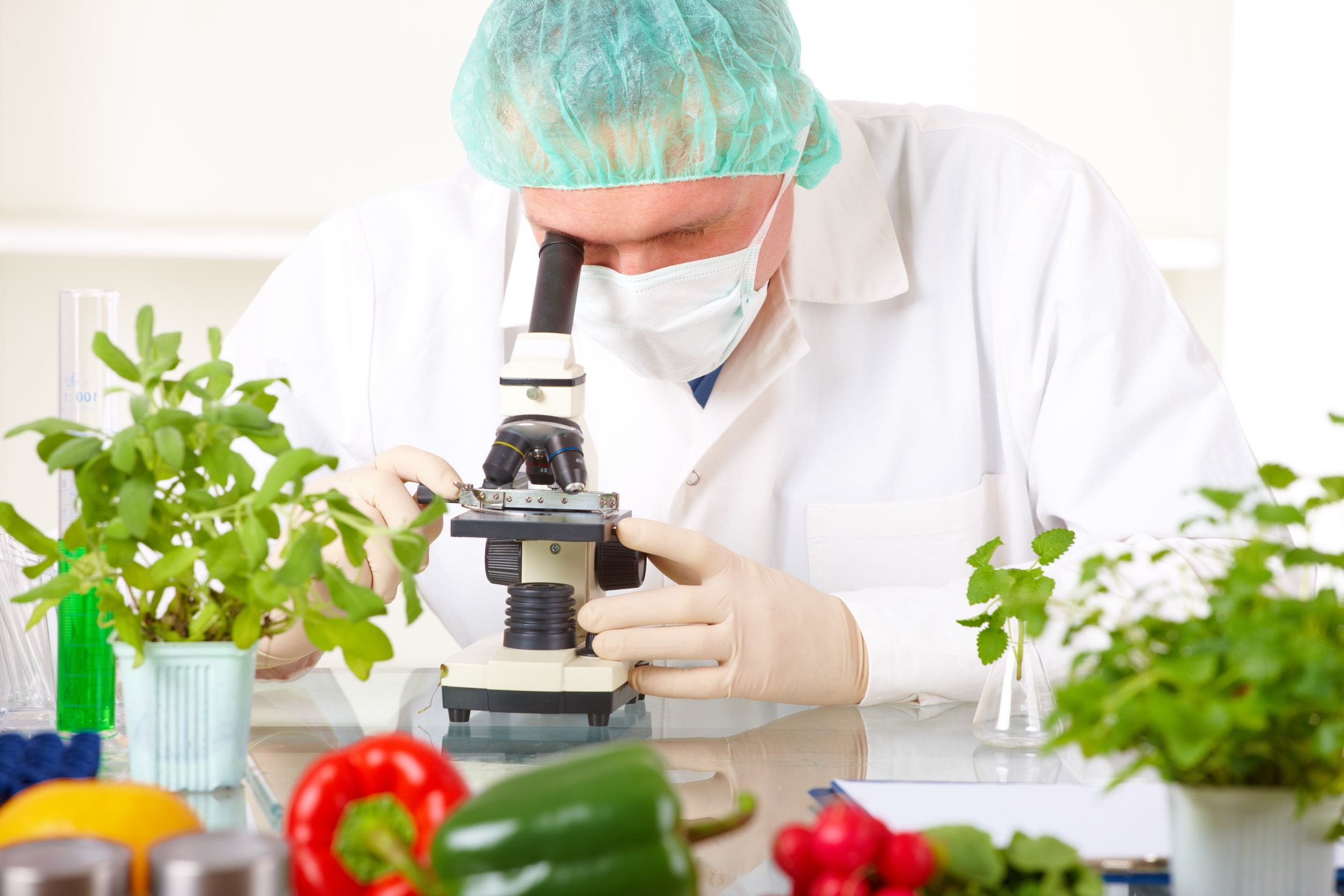 an analysis of the experiment on the genetically modified food