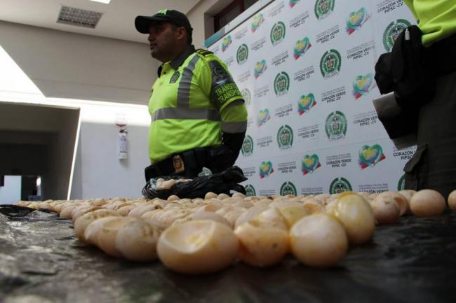 Sea Turtle Eggs For Sale And Buy Sea Turtle Eggs