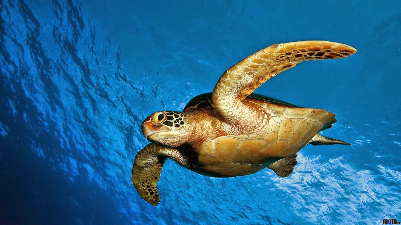 Conoce y Ayuda a las Tortugas Marinas on emaze