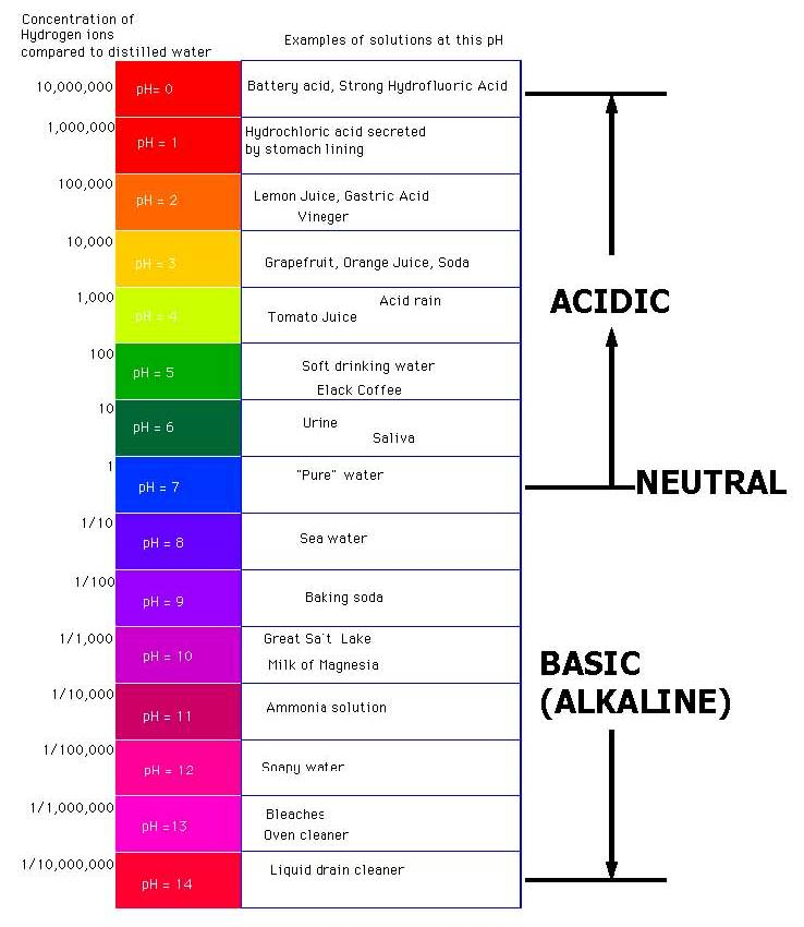 Acids And Bases On Emaze