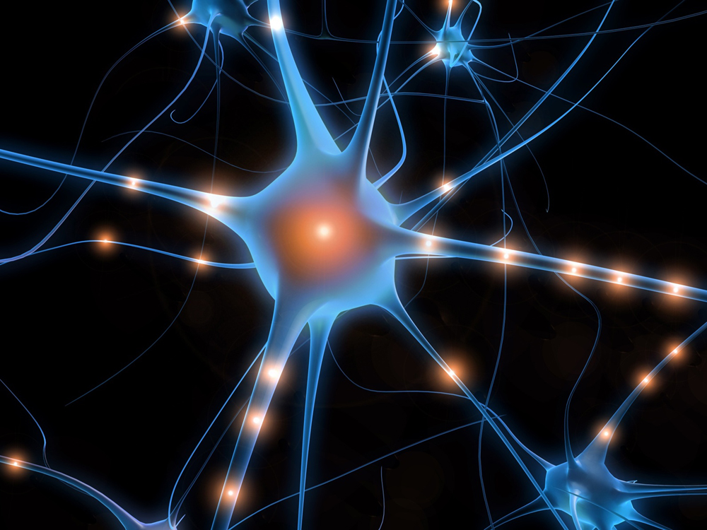 lab 3 neurophysiology of nerve impulses Lab report- neurophysiology of nerve impulses introduction neurons (also known as neurons, nerve cells and nerve fibers) are electrically excitable and the most important cells in the nervous system that functions to process and transmit information.
