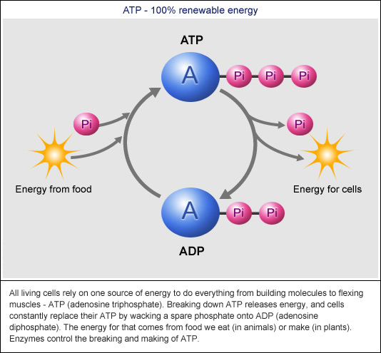 Atp And Sources Of Energypptx