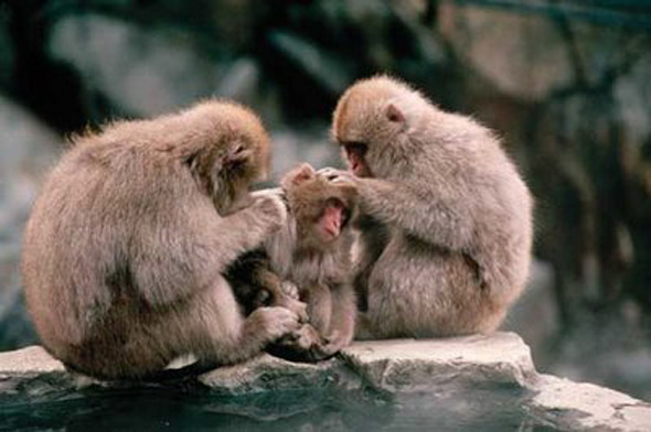 Clan de monos