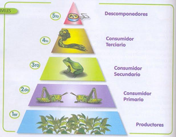 Relatii si piramide trofice on emaze