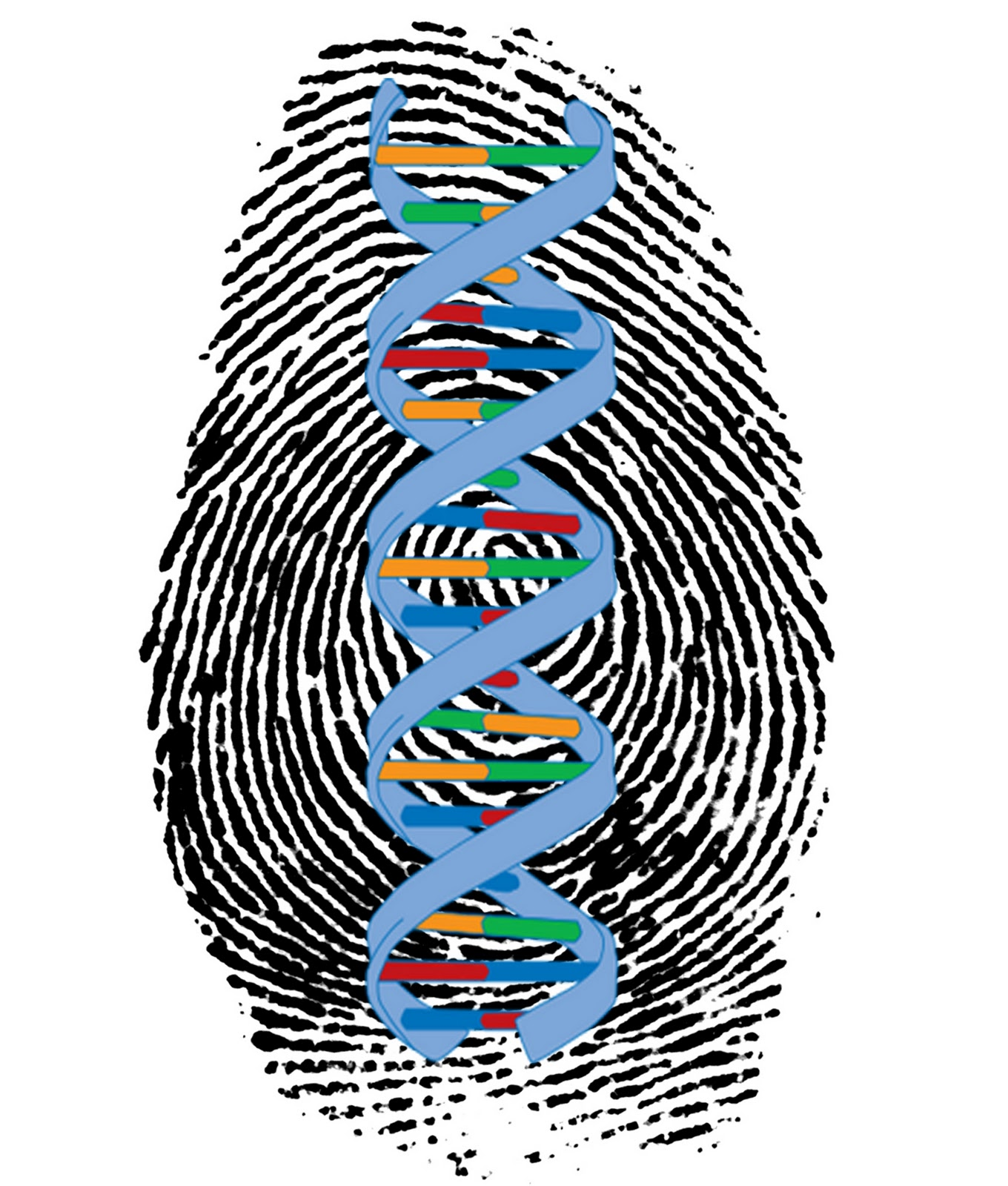 controversy in dna profiling In 2012, shortly after legal aid filed its challenge to the fst, two developers in the netherlands, hinda haned and jeroen de jong, released lrmix studio, free and open-source dna-profiling software—the code is publicly available for.