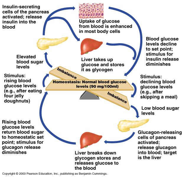 Endocrine System Pptxpptx