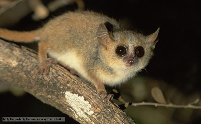 amazon rainforest animals. gorrilla amazon rainforest animals n