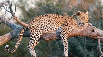 defenders of wildlife facebook