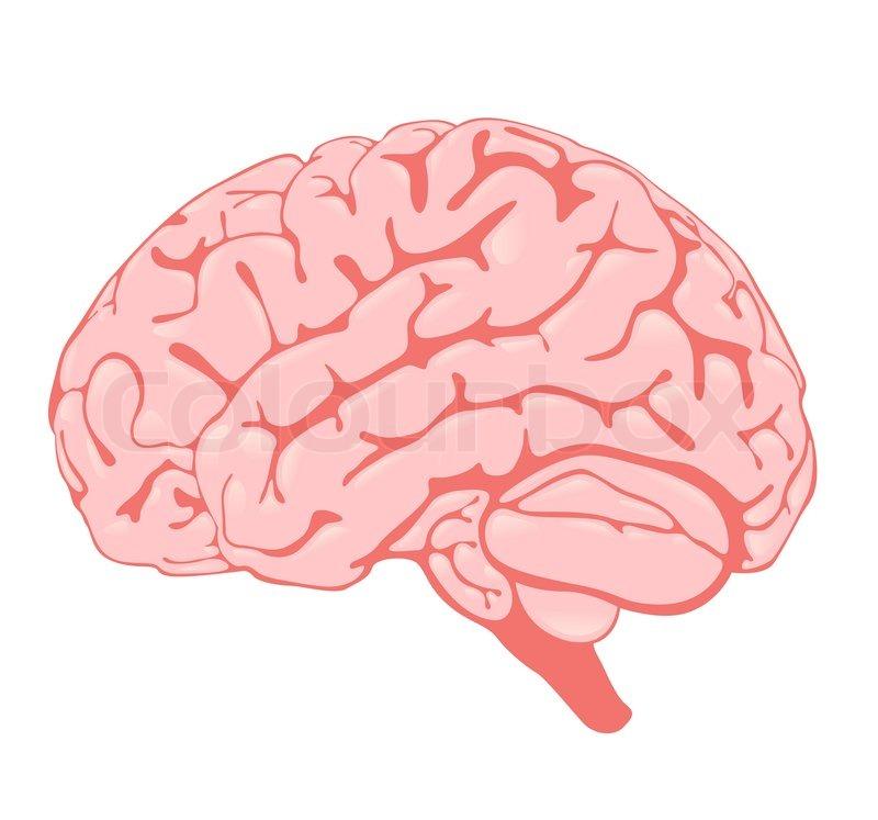 storhjernen