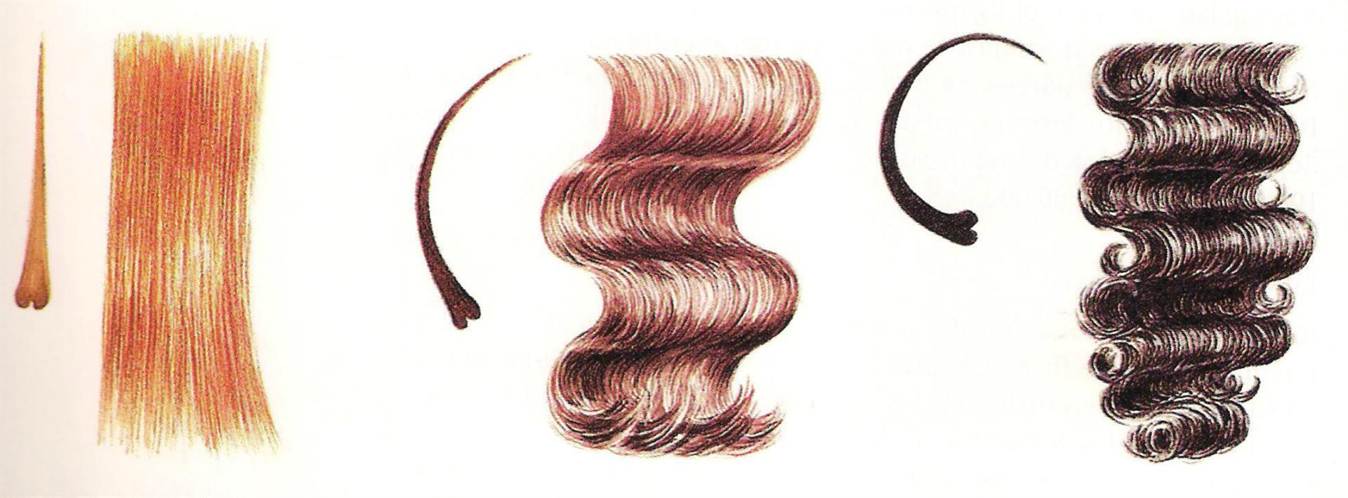El aceite de bardana para los cabellos y la caspa