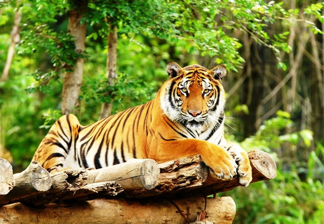 Y Tigers Are Endangered x 158 y 109