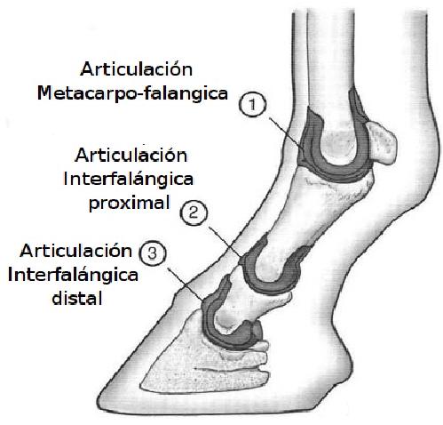 Radiología Y Venografia del casco ...