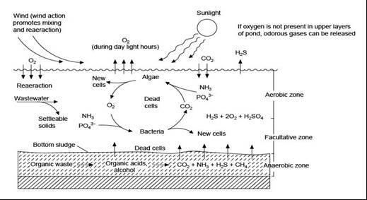 Ww presentation on emaze for Design of stabilization pond