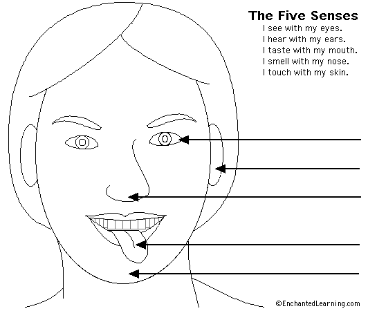 Free Worksheets The Five Senses Worksheet Free Math Worksheets – Five Senses Worksheet