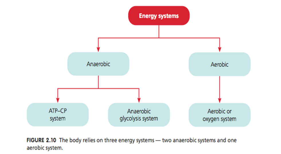 atp-pc energy system resynthesis Provides twice as much energy for atp resynthesis than the atp- pc system fatiguing metabolic by-products produced at the lactate inflection point (lip).
