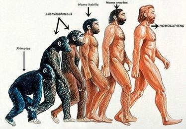 Evolucion-Homo-Sapiens