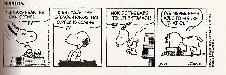 how to become a dog behaviorist