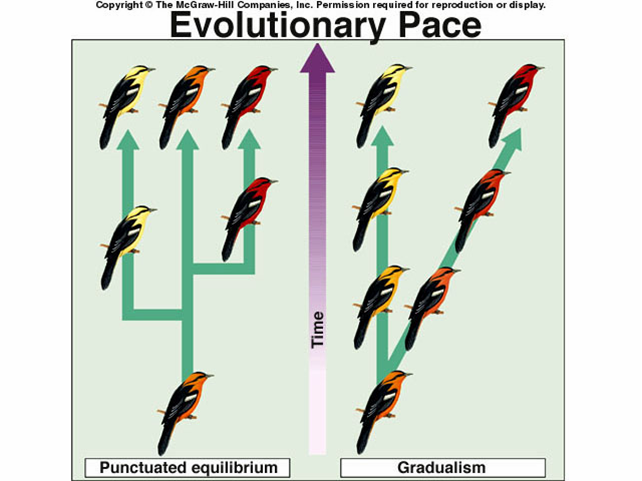 an analysis of gradualism Gradualism and punctuated equilibrium are two ways in which the evolution of a  species can occur a species can evolve by only one of these, or by both.