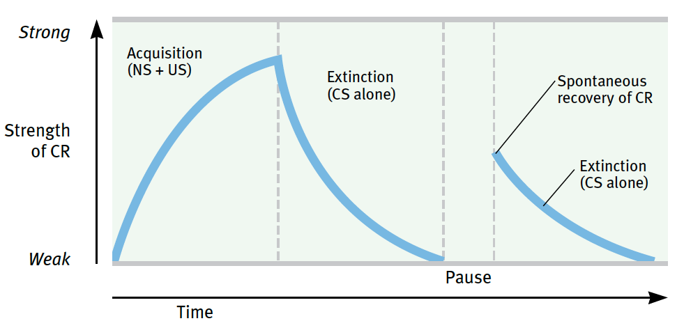 spontaneous recovery and extinction essay (n = 9), review of animal extinction research and theory, and evaluation of  whether major principles  table 1 summary of cue-exposure treatment studies  criteria for  spontaneous recovery, reinstatement and failure to extin- guish the  most.