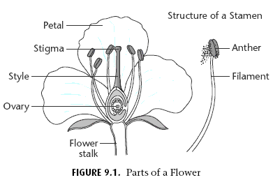 Identifying Flower Parts Worksheet - Flowers Ideas