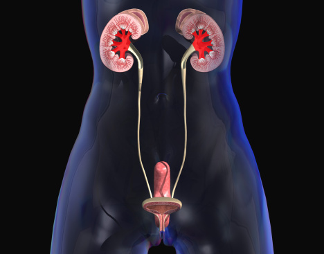 Urinary Systems.pptx on emaze