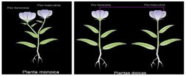 Clases De Flores