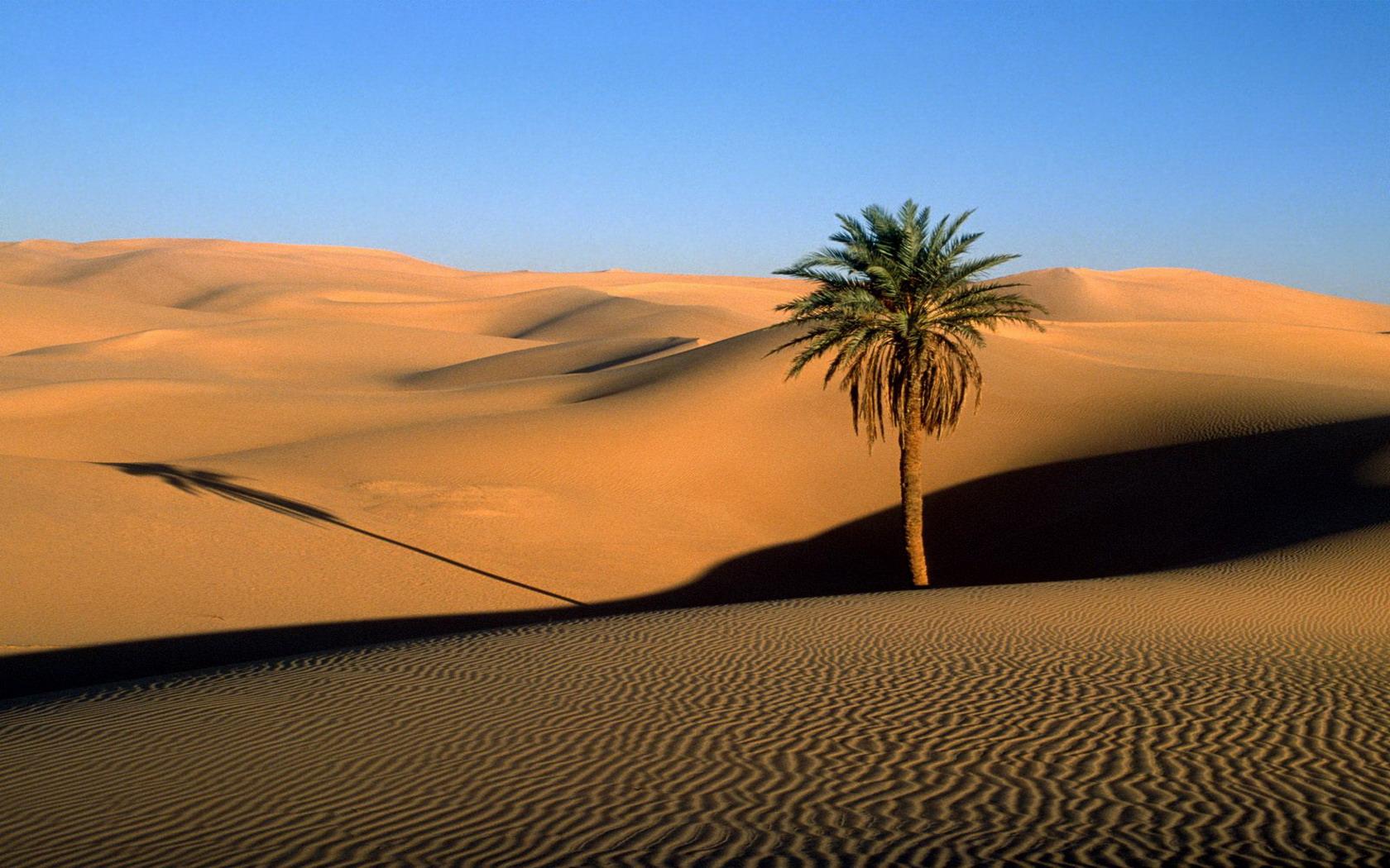 Desert biome presentation on emaze