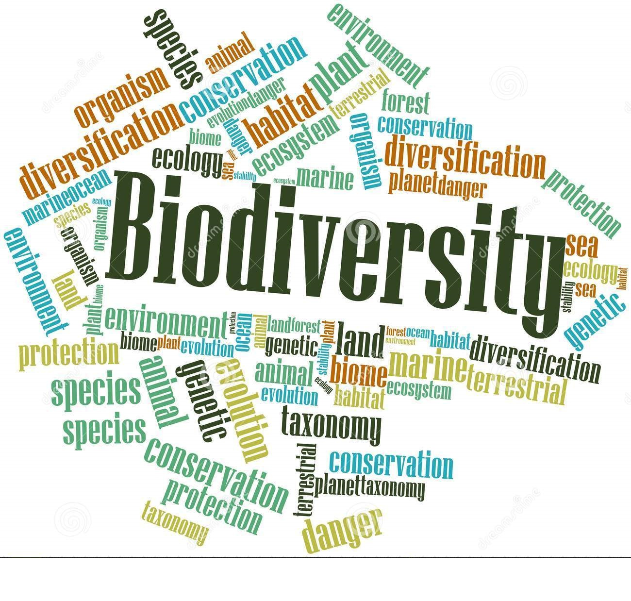 biodiversity on  biodiversity response policy suggestions eco technology solutions