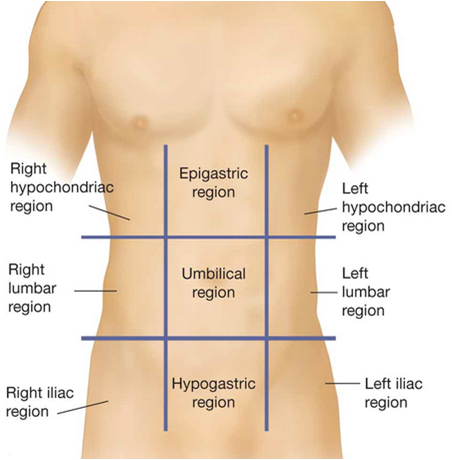 Abdominal divisions anatomy