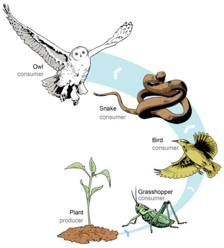 Food Chain (ISTC 301 Digital Story)
