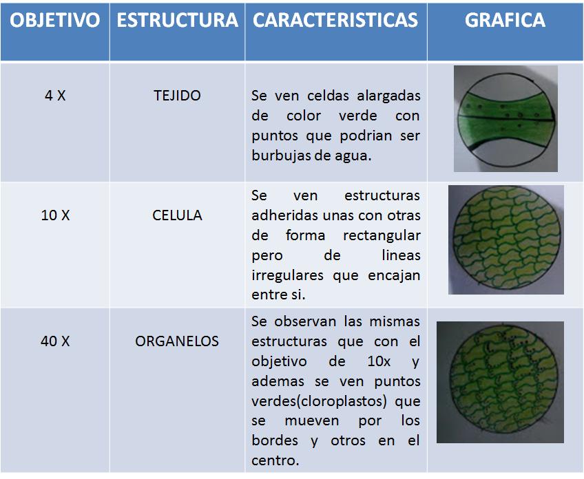 tipos de tinciones histologicas pdf