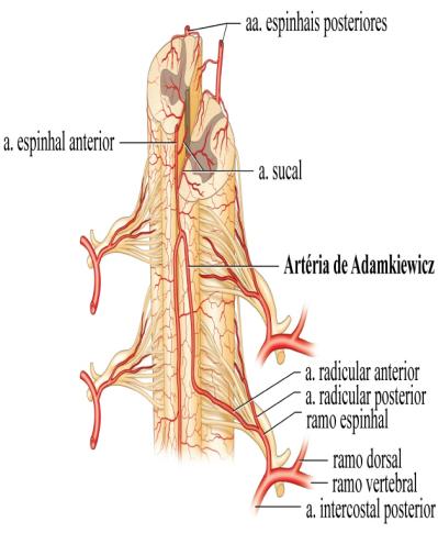 Anatomia Columna. on emaze