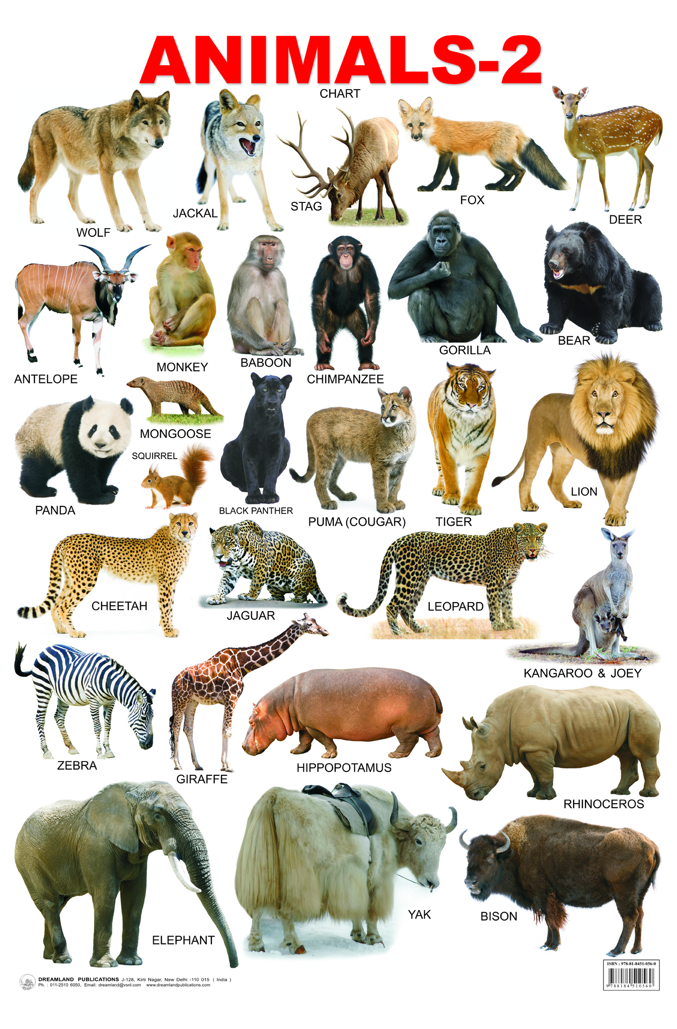 Domestic Animals Images, Stock Photos Vectors Shutterstock Pictures of domestic animals in india