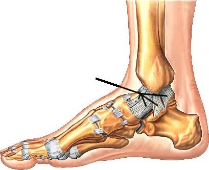 ATR - Ankle & Foot Anatomy on emaze