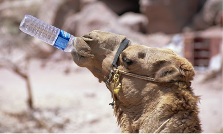 egypt water crisis