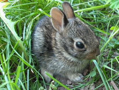 Wild Rabbits By Gdykas23 On Emaze
