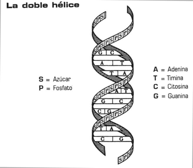 Organizacion Del Genoma