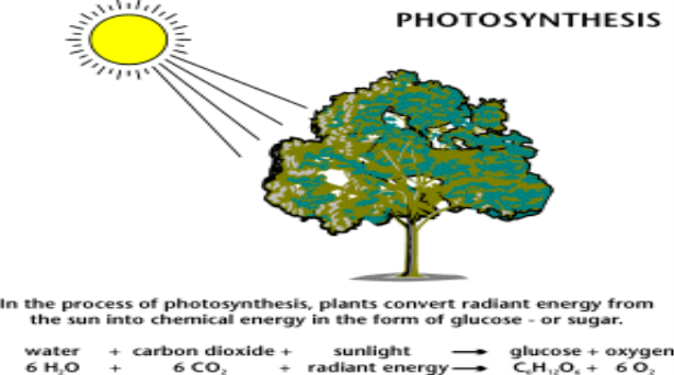 process of chemosynthesis for kids Photosynthesis is the process by which plants and other things make food it is a chemical process that uses sunlight to turn carbon dioxide into sugars the cell can.