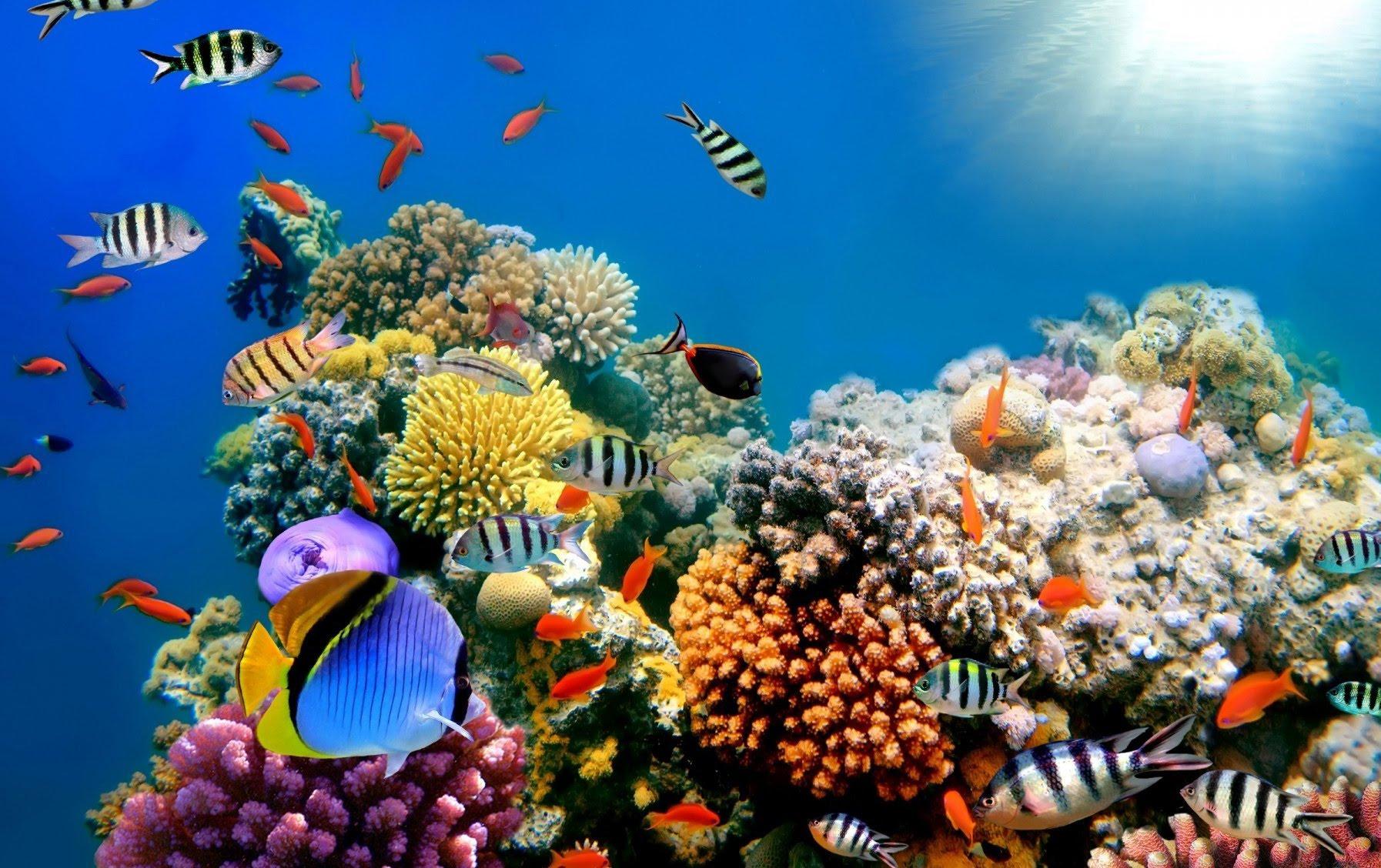 「Coral Reef」的圖片搜尋結果