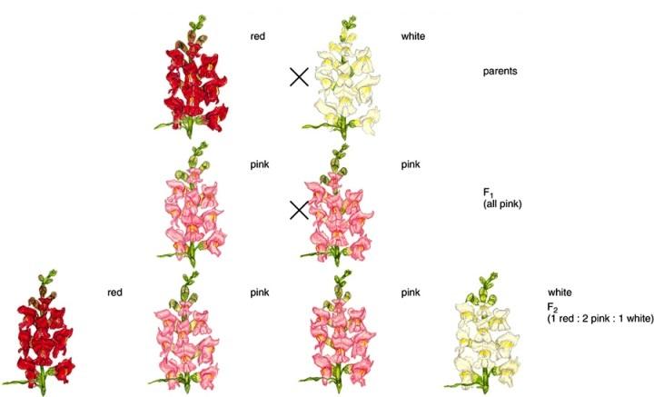 الأنماط الوراثية المعقدة By M Y B85 On Emaze